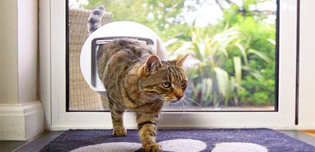 Microchip Cat Flap UK
